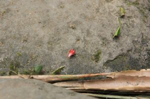 Cutting ants on their little procession