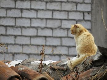 cat looking over his rooftop kingdom in Latacunga