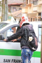 Ecuadorian dog transport (isn't that a cute dog?)