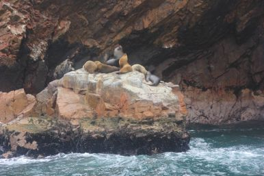 Sea lions on their little property