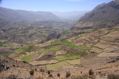 Colca canyon is one of the important agricultural centres of Peru.