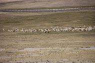 Many animals on the way