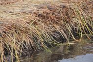 The different layers of the reeds. The lower end of the islands rots. So new material is just put on top regularly.