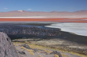 Flamingos, thousands.