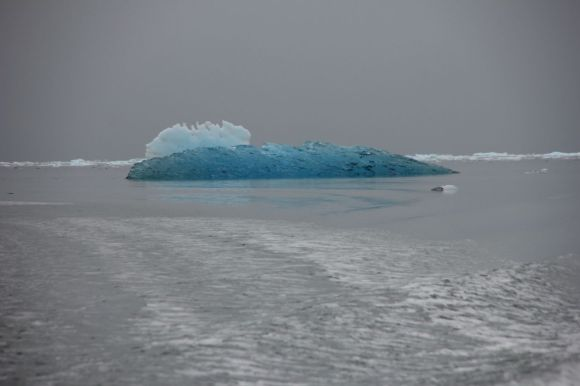 The captain flew in the little boat through the ice bergs... what a great day...