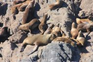 """Many sea lions """"hang around"""" here as well..."""