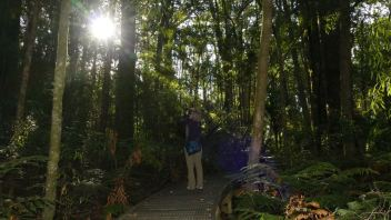 In the Kauri Forest