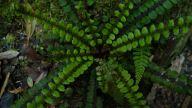 wonderful plants