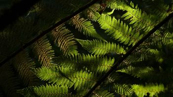 again and again: the forest and ferns are always a beauty in New Zealand