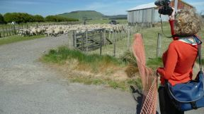 We saw a farmer trying to hold the fence for the sheep to cross the road. So we came an helped.