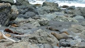 count the seals...