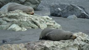 for a seal that looks real comfortable